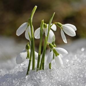 Poslové jara aneb jarní květiny z přírody kolem nás