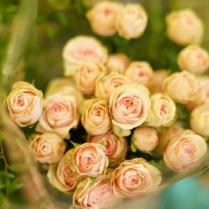 Tajemství květin z Florea.cz aneb Co jste doteď možná nevěděli