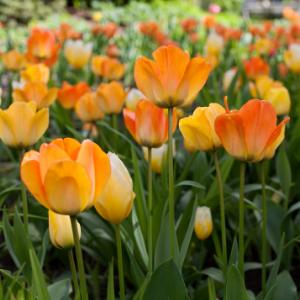 Užijte si barvy a vůně jarních květin
