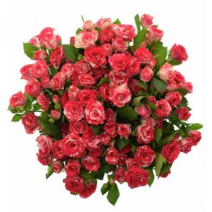 Péče o trsové růže. A spousta dalších informací.