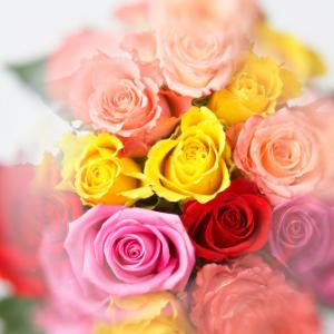 Barevné růže