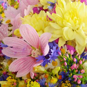 Rozkvetlé léto je tady: jaké květiny pořídit a jak se o ně starat