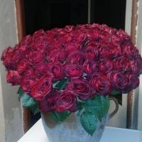 Sto růží Madam Red