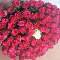 Sto červených růží a jedna bílá