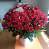 Sto rudých růží