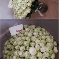 Sto bílých růží