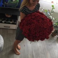 Sto růží