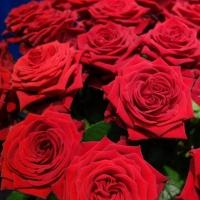 Luxusní růže