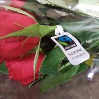 Fair Trade růže
