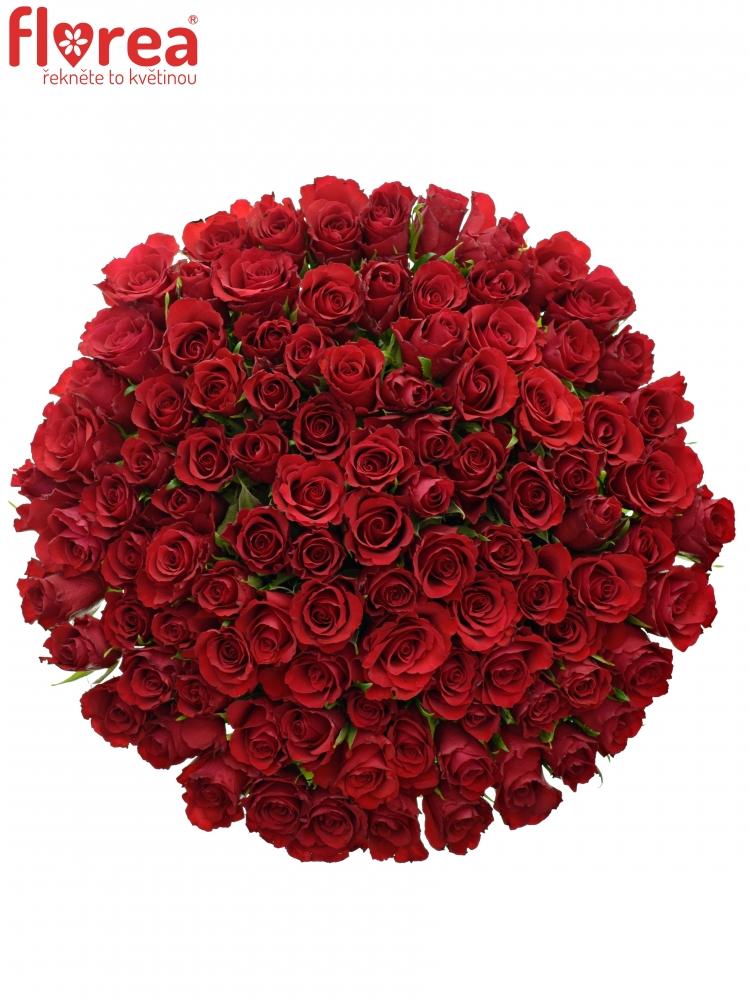 Kytice 100 červených růží RED CALYPSO 50cm