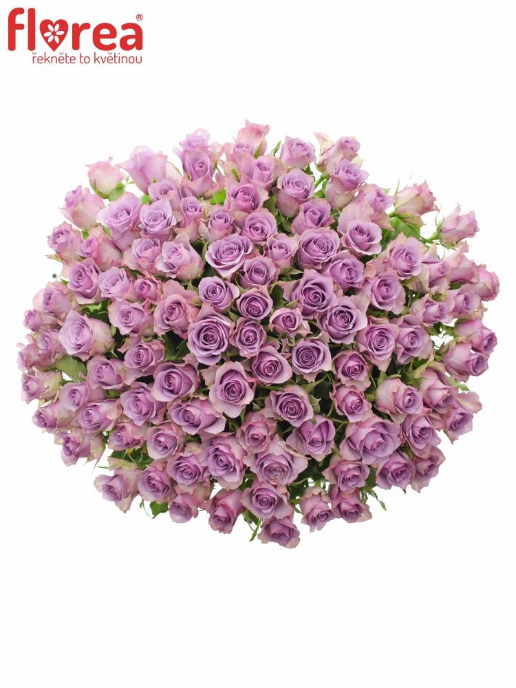 Kytice 100 fialových růží NIGHTINGALE 50cm