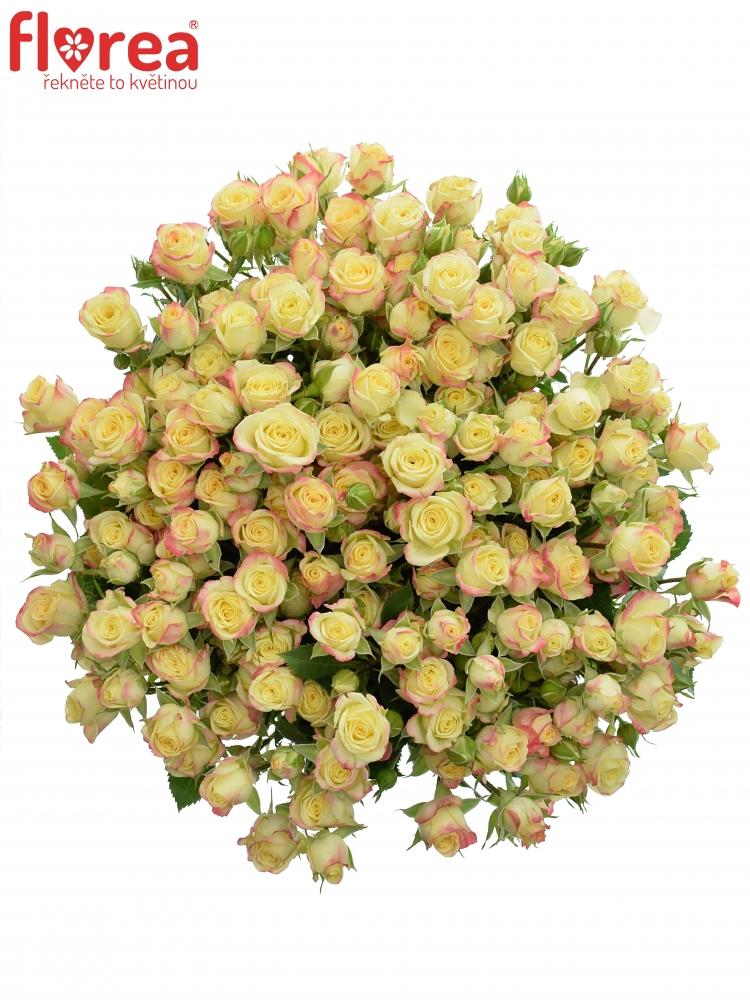 Kytice 100+ květů růží CANDELICIOUS 50cm