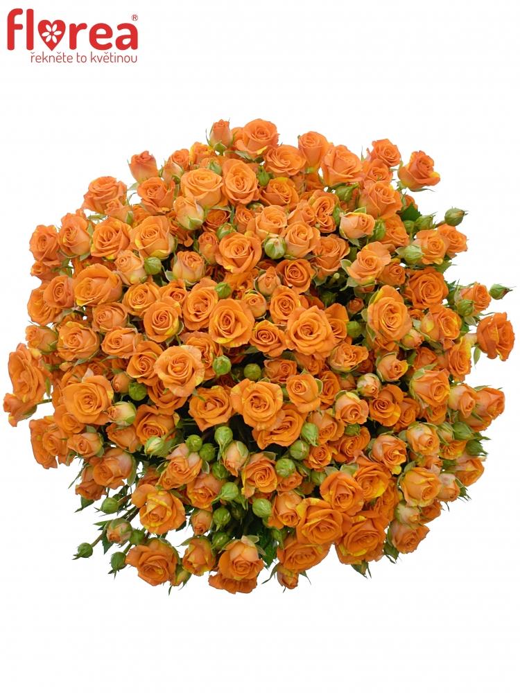 Kytice 100+ květů růží SMASHING 60cm