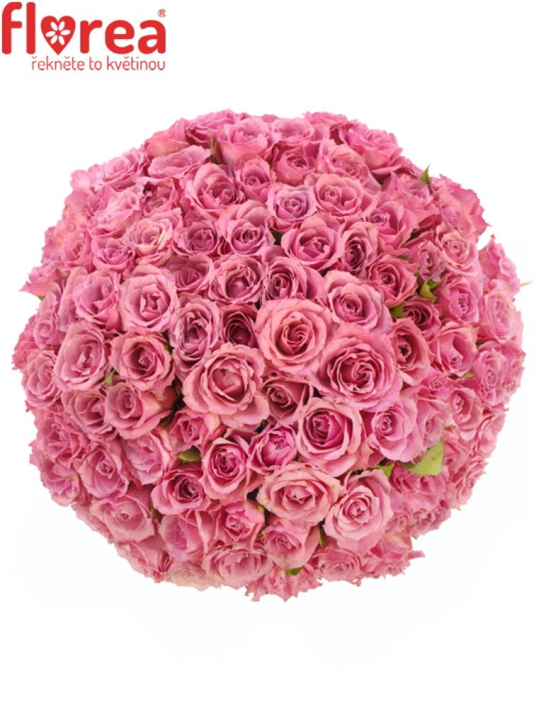 Kytice 100 růží ALYSSA 50cm