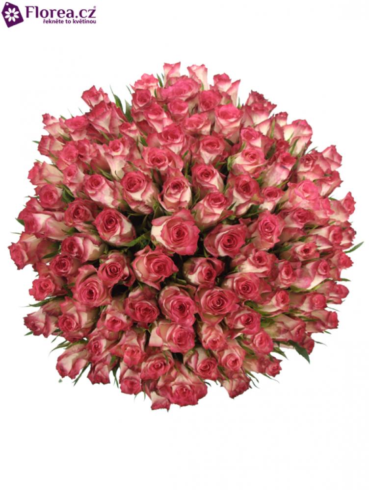 Kytice 100 růžových růží DOUBLE DATE 40cm
