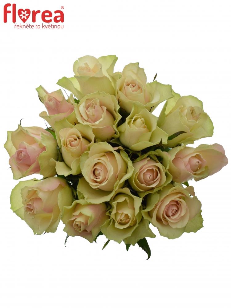 Kytice 15 krémovozelených růží LA BELLE 60cm