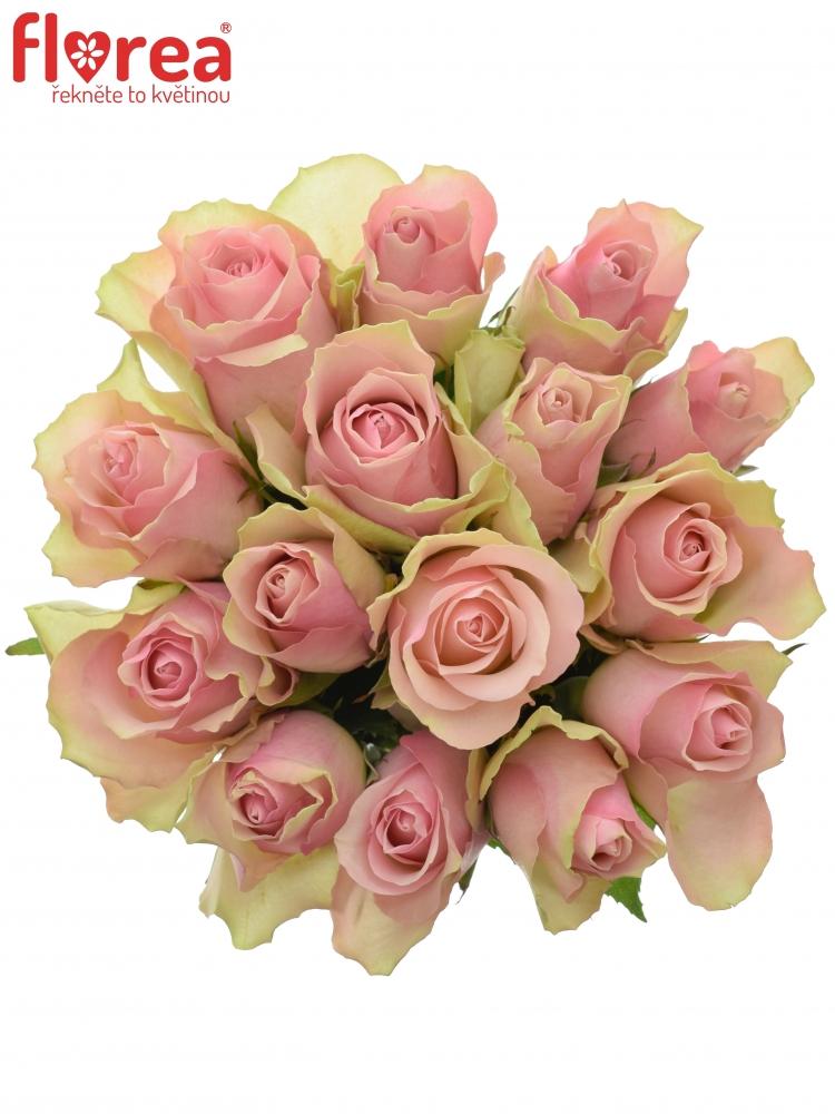 Kytice 15 růžových růží BELLE ROSE 35cm