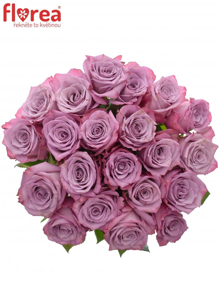 Kytice 21 fialových růží MOODY BLUES 70cm