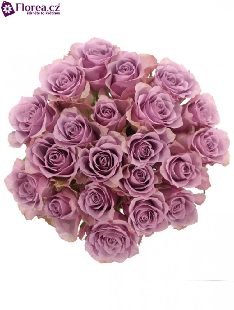 Kytice 21 fialových růží NIGHTINGALE 50cm