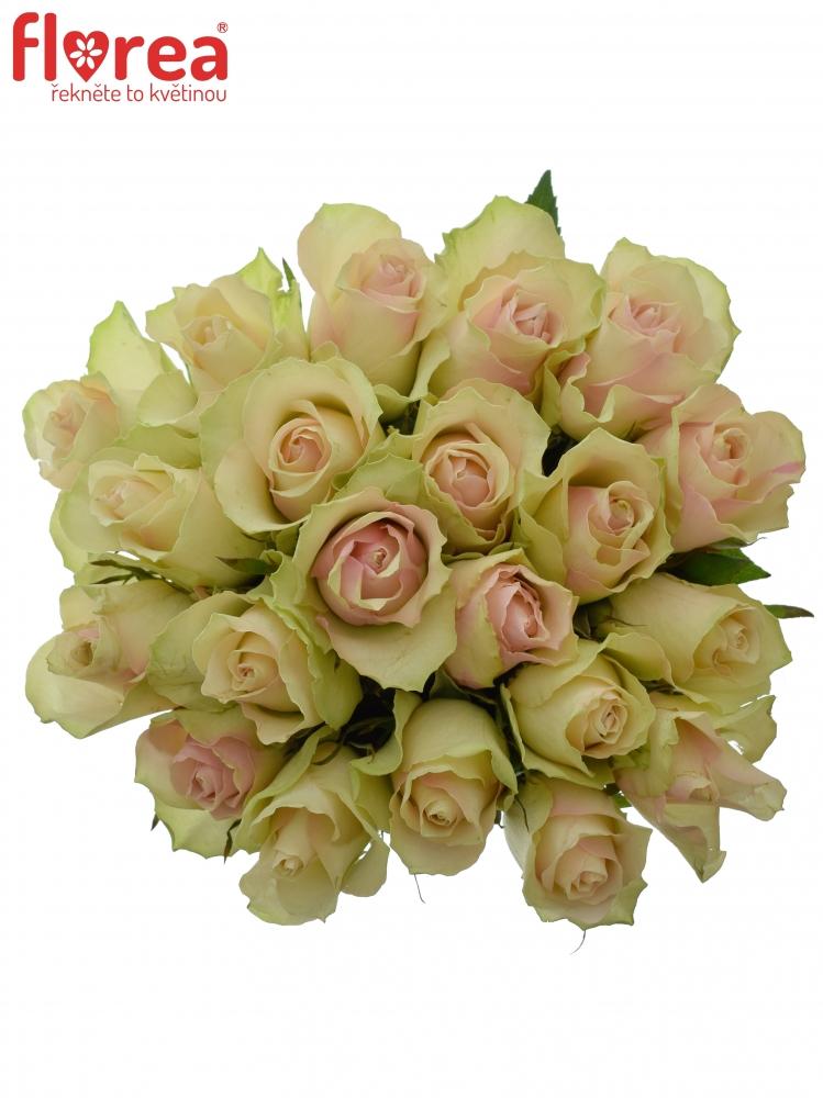 Kytice 21 krémovozelených růží LA BELLE 60cm