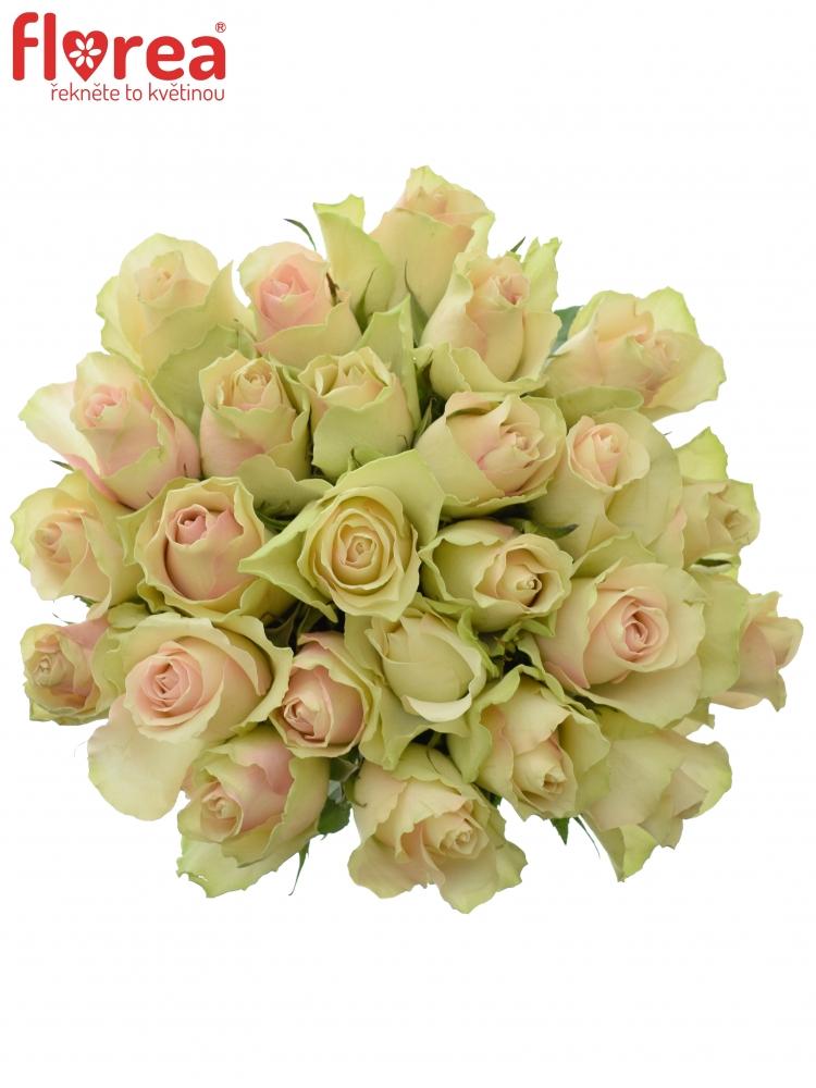 Kytice 25 krémovozelených růží LA BELLE60cm