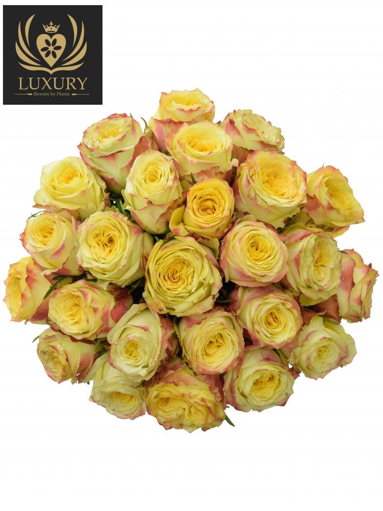 Kytice 25 luxusních růží KRYPTONITE 70cm