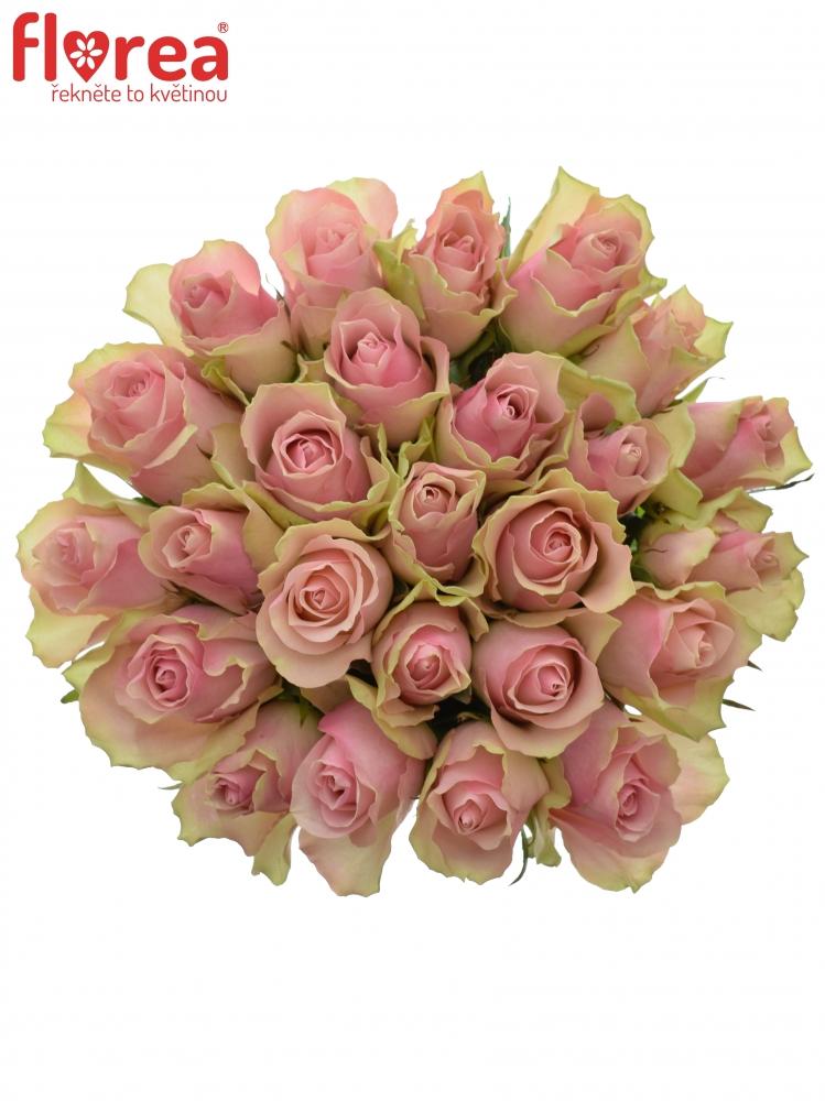 Kytice 25 růžových růží BELLE ROSE 35cm