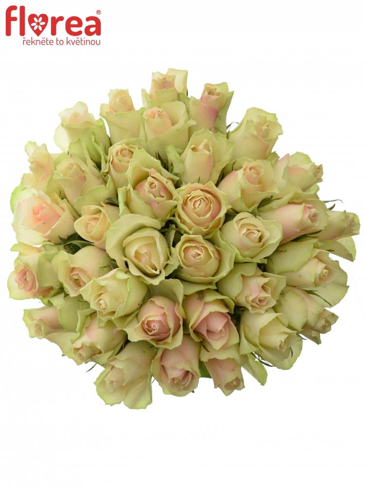 Kytice 35 krémovozelených růží LA BELLE 70cm