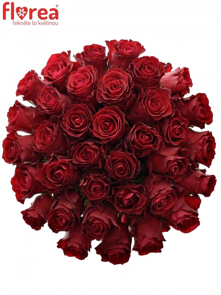 Kytice 35 rudých růží RHODOS 90cm