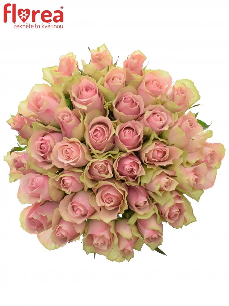 Kytice 35 růžových růží BELLE ROSE 35cm