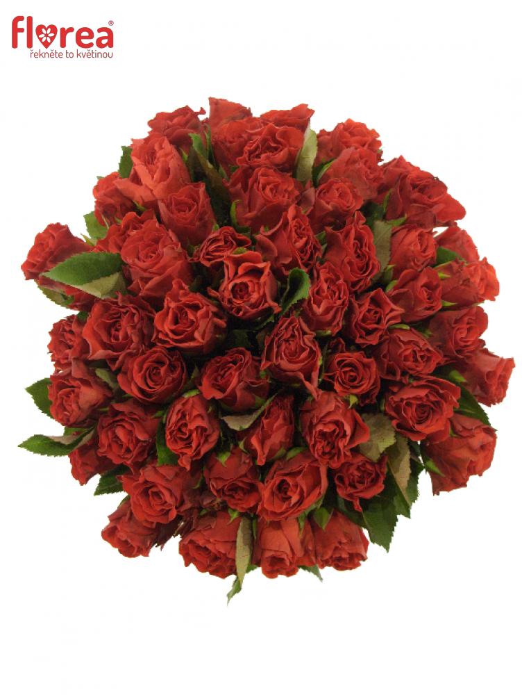 Kytice 55 červených růží EL TORO 40cm
