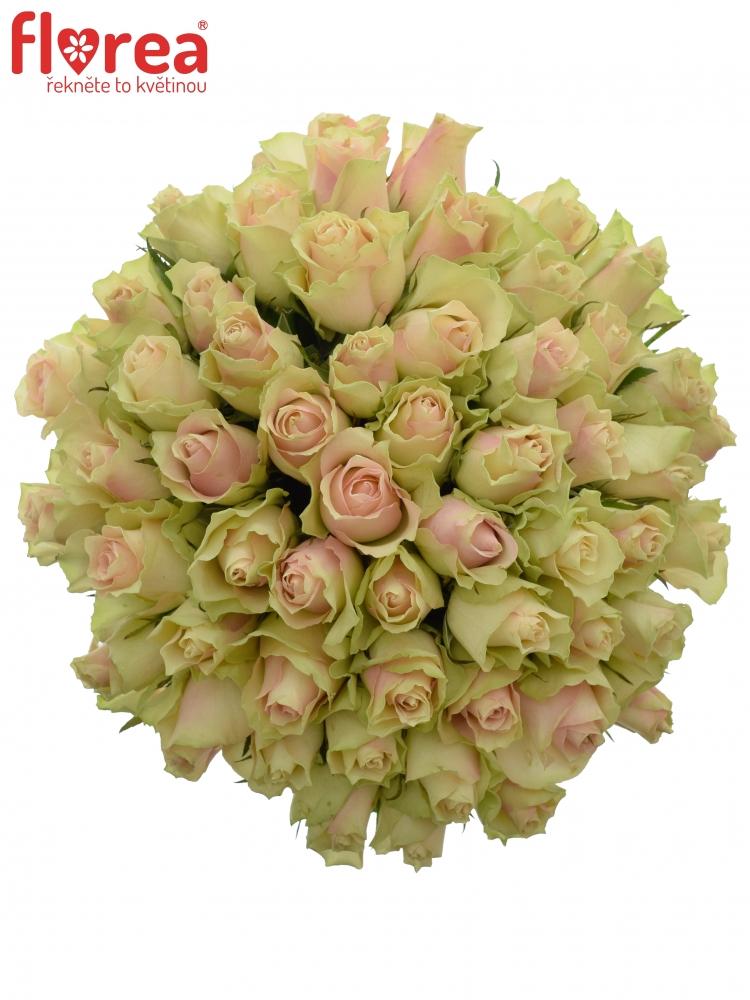 Kytice 55 krémovozelených růží LA BELLE 60cm