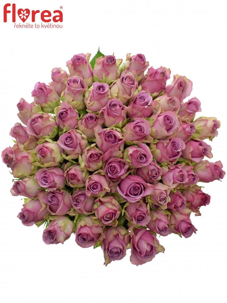Kytice 55 modrofialových růží COOL WATER 50cm