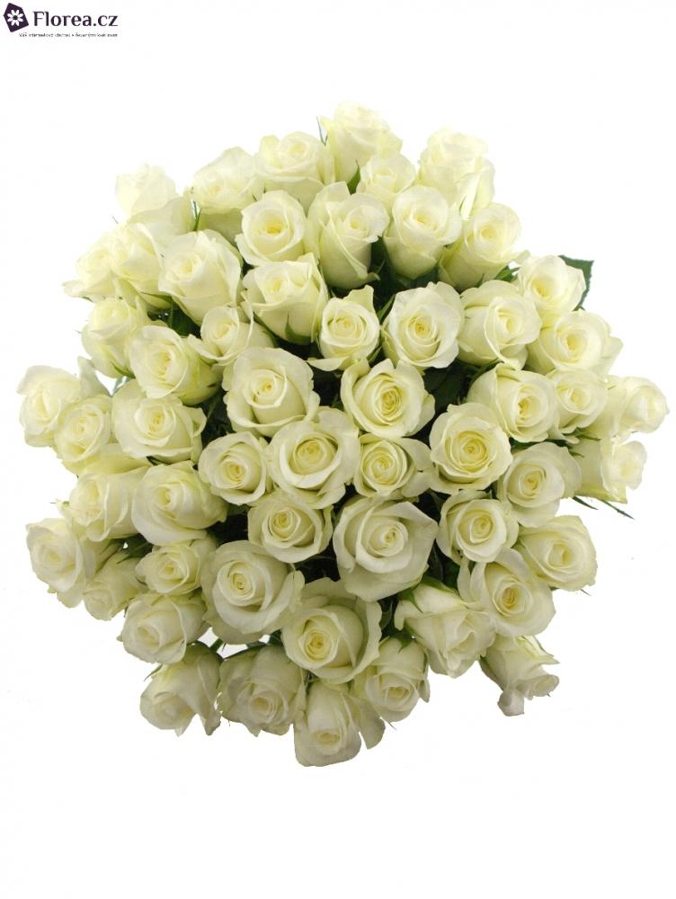 Kytice 55 bílých růží AKITO 40cm