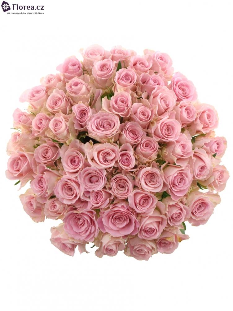 Kytice 55 růžových růží BABYFACE 40cm