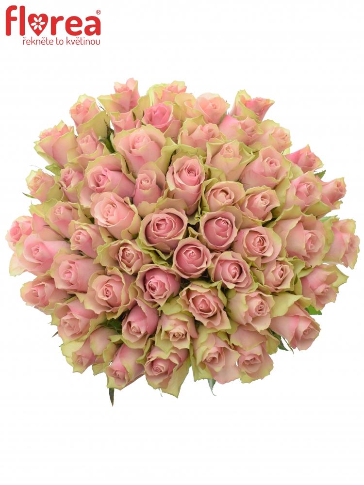 Kytice 55 růžových růží BELLE ROSE 35cm