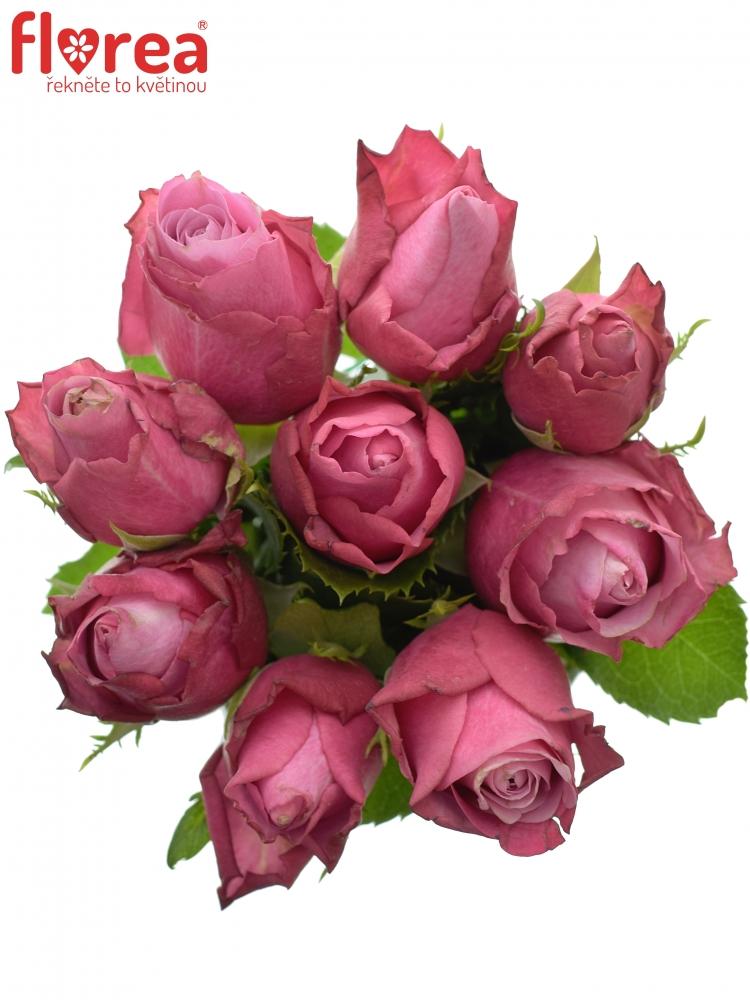 Kytice 9 fialových růží DEEP WATER 50cm