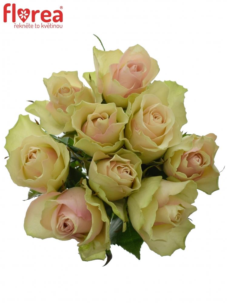 Kytice 9 krémovozelených růží LA BELLE 60cm