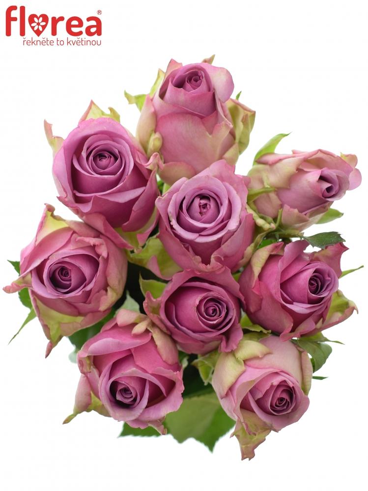 Kytice 9 modrofialových růží COOL WATER 50cm