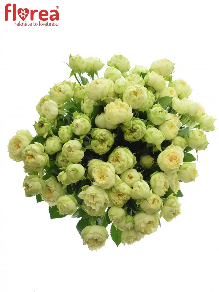Kytice 100+ květů růží BLANCHETTE SUPER 50m