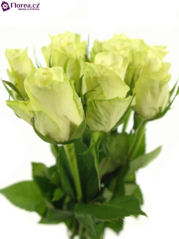 Svazek bílých růží ATHENA 40cm (S)