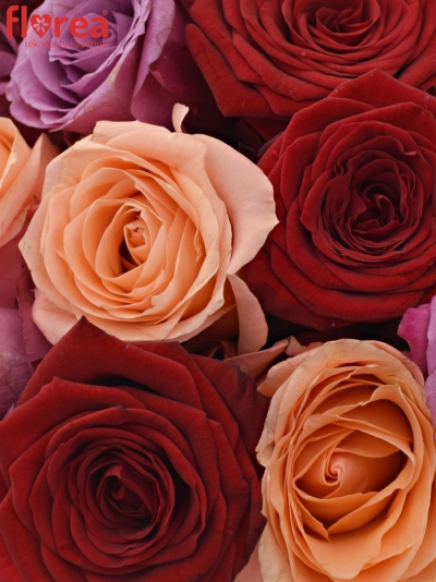 Kytice 21 míchaných růží RED LADY ORLEA 50cm