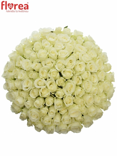 Kytice 100 bílých růží COUNTDOWN 60cm