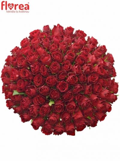 Kytice 100 rudých růží MADAM RED 60cm
