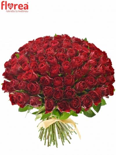 100 růží Madam Red 60cm