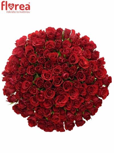 Kytice 100 červených růží RED CALYPSO 40cm