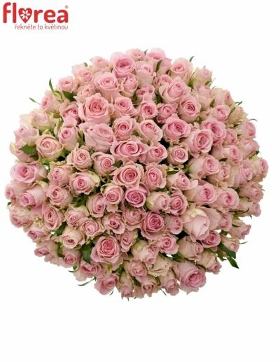Kytice 100  růžových růží BABYFACE 40cm