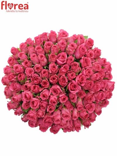 Kytice 100 malinových růží TENGA VENGA 50cm