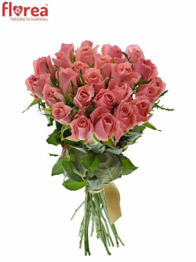 25 růží ACE PINK+