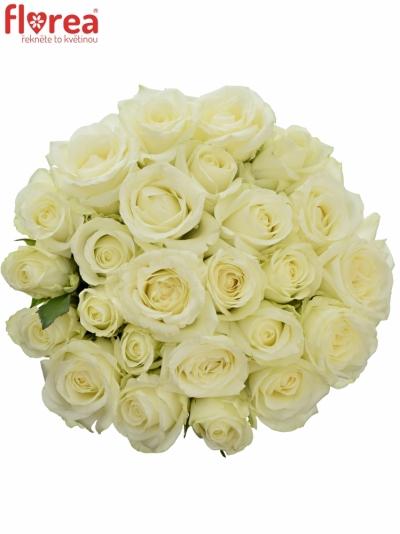 Kytice 25 bílých růží COUNTDOWN 40cm